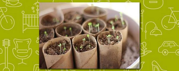 rouleaux de papier toilette recyclés en pots de fleurs 100% écolos